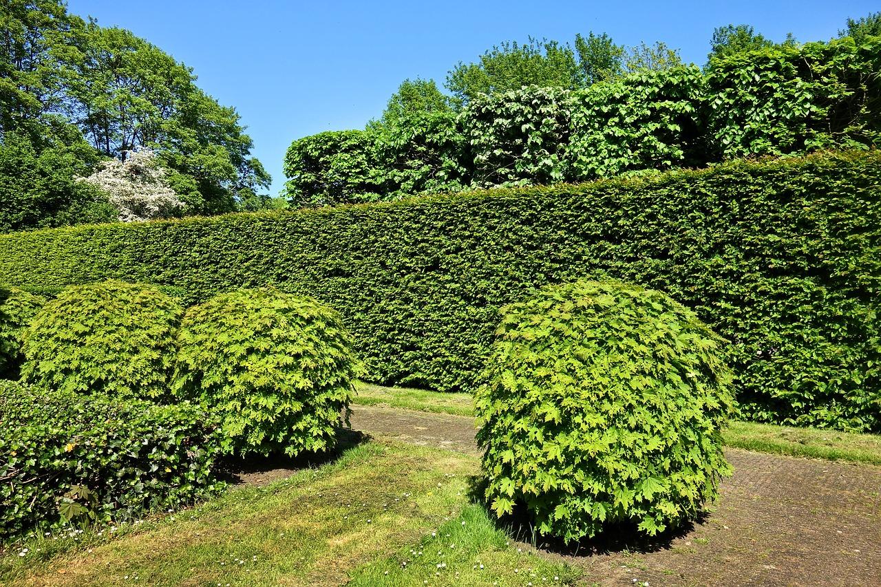 Fertighecke im Garten pflanzen